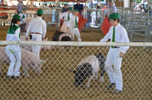 4H Pig show