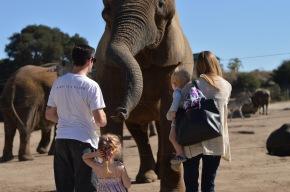 Monterey Zoo :: FeedingElephants